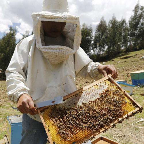 Ustanova Magistra Program Edukacija pčelar