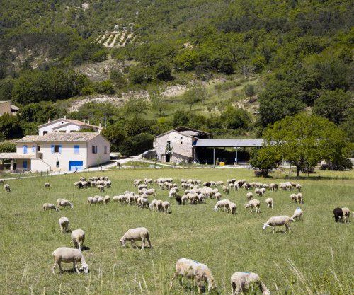 voditelj-poljoprivrednog-imanja-ustanova-magistra-turizam-seoski